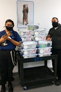 Two people standing next to a table holding stacked kitten kits and one person holding a kitten