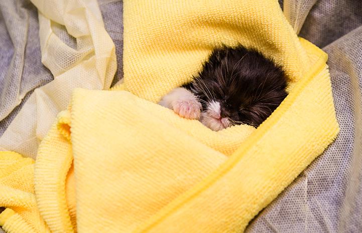 Kitten Nursery in SoHo in NYC | Best Friends Animal Society
