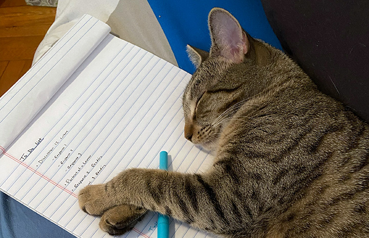 Brown tabby kitten sleeping on a pad of paper and pen