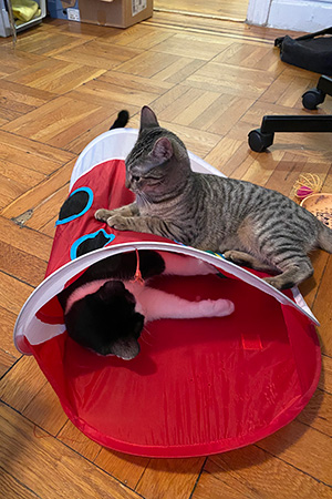 Two kittens playing on and in a cat tube toy