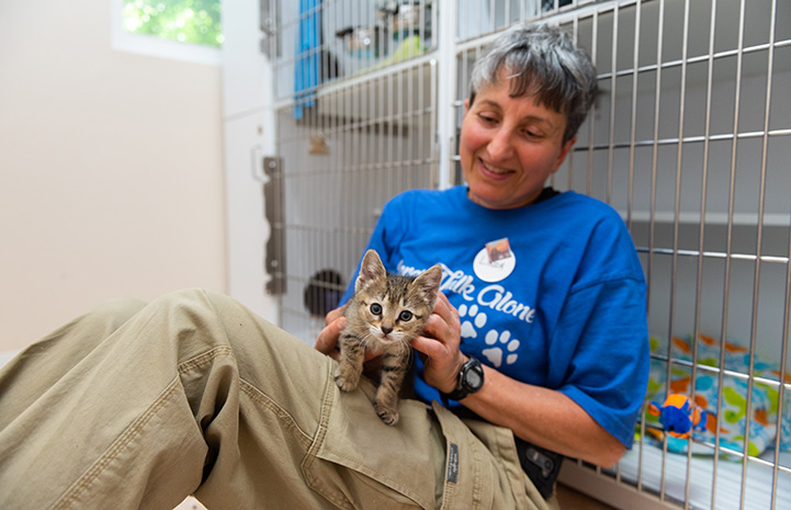 Linda the volunteer leaning against some cat kennels with Xactly the kitten in her lap