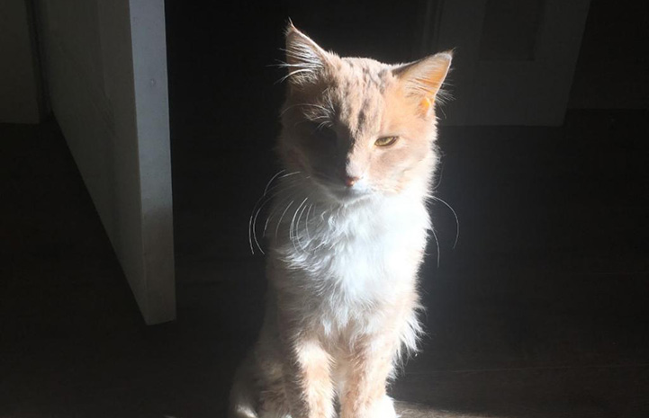 Harry the kitten in a bright sunbeam with a dark background