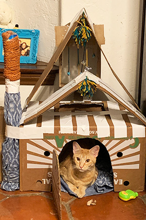 Orange kitten in a cardboard cat playhouse
