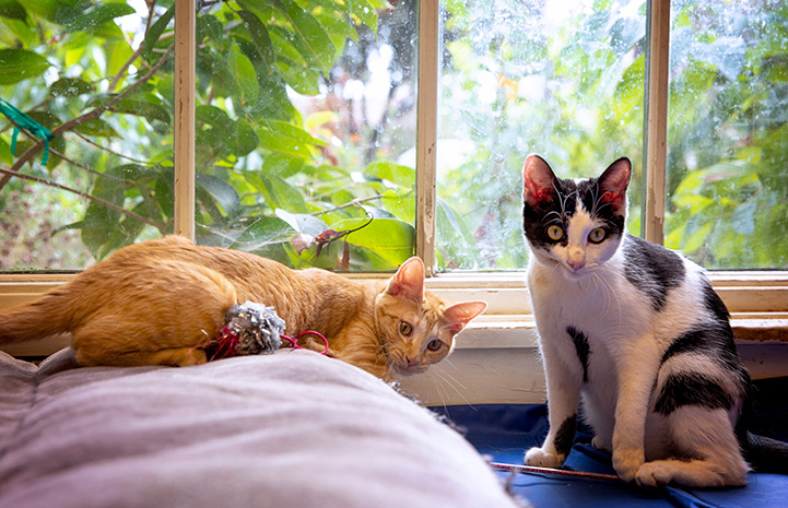 Harvey and Tres Leches the kittens together in a windowsill