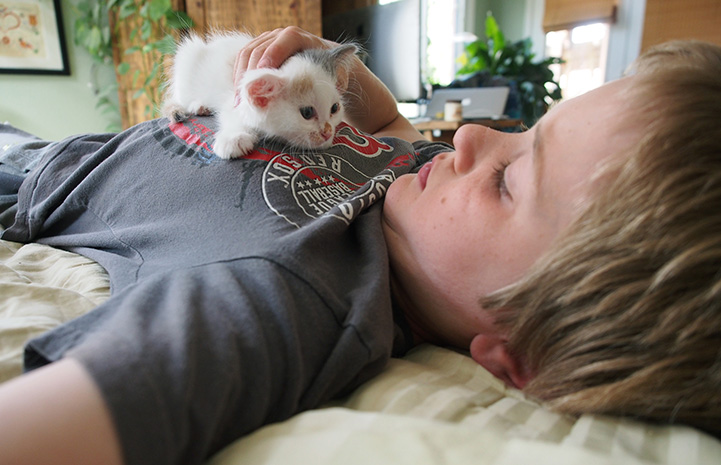 Young boy lying down with foster kitten on his chest