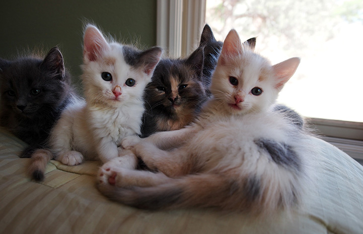 Litter of kittens on a bed