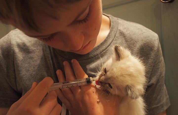Young boy syringe feeding adorable foster kitten