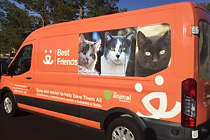 Orange Best Friends van with community cat pictures on the side