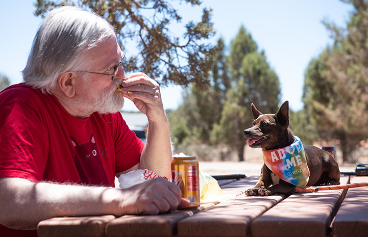 Man eating while BoPeep the dog watches while lying on the table