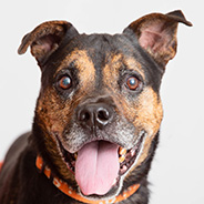 Adopt Lola the dog available for adoption from Los Angeles