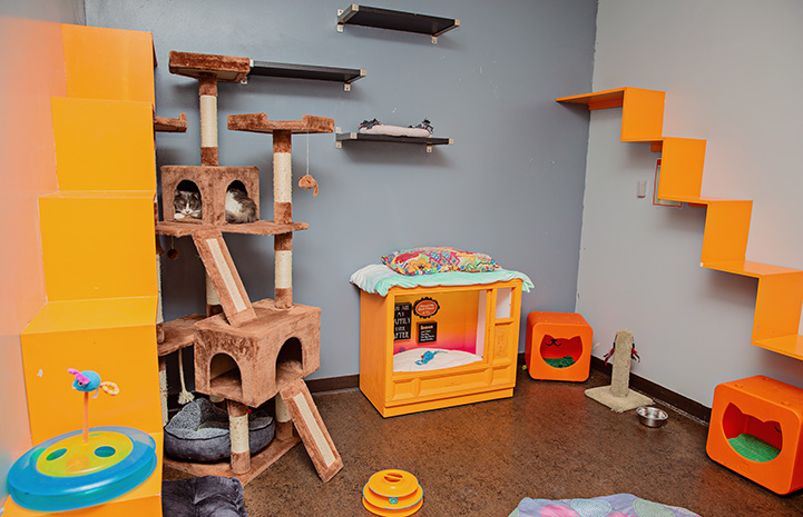 Free roam cat room with lots of shelves and other fun items for cats to play on and in