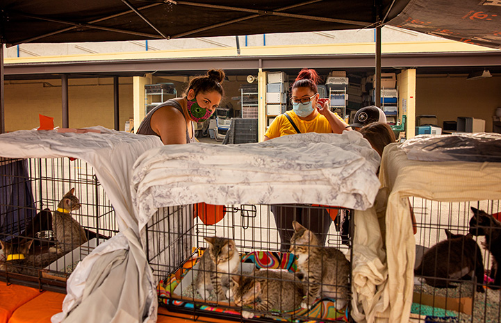 Row of wire kennels holding kittens ready for adoption at the drive-through event with some masked people looking at them