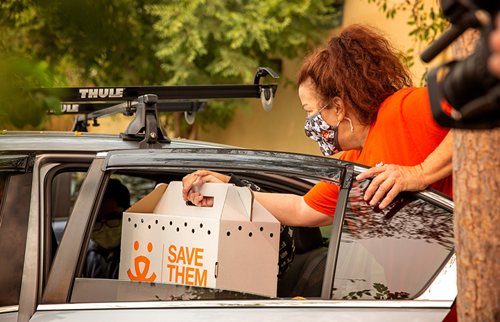 Woman handing a Save Them All Best Friends cardboard carrier containing a kitten into the back seat of a car