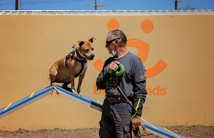 Man holding a toy next to a dog, intently staring at the toy from on an agility ramp