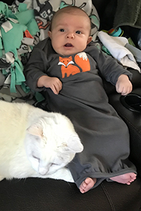White cat Bentley lying next to a baby