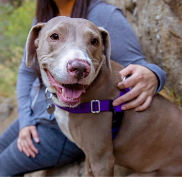 Smiling gray dog