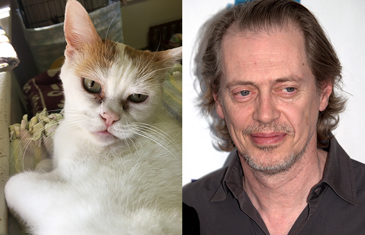 Lydia the cat next to Steve Buscemi as look-alikes