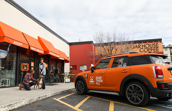 Salt Lake City's Best Friends MINI Countryman is the go-to vehicle for picking up cats and kittens from area shelters