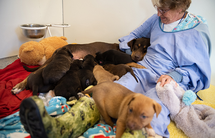 Mama dog Marsi lying against a woman while her puppies nurse, except for one puppy
