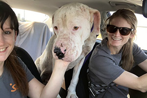 Scamper the dog in a car with two women on his ride to Utah