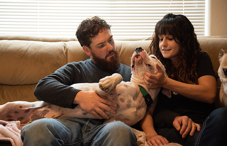 Foster parents Megan and Dan snuggling with Scamper the dog on a couch