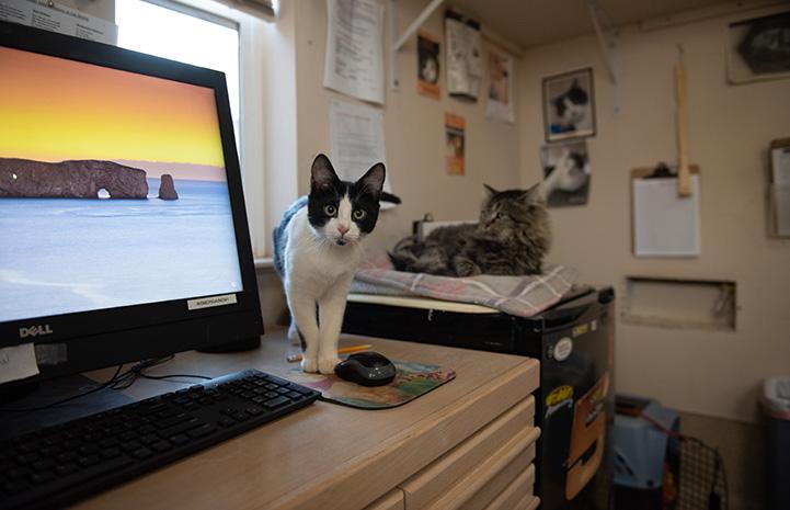 Raisin the kitten peeking from behind a computer monitor