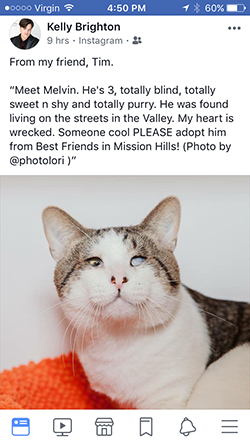 It was through Facebook that Jackie Gudgel first learned about Melvin, a blind cat at the Best Friends Pet Adoption and Spay/Neuter Center in Los Angeles