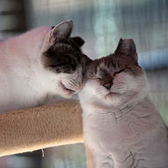 Cats nuzzling one another