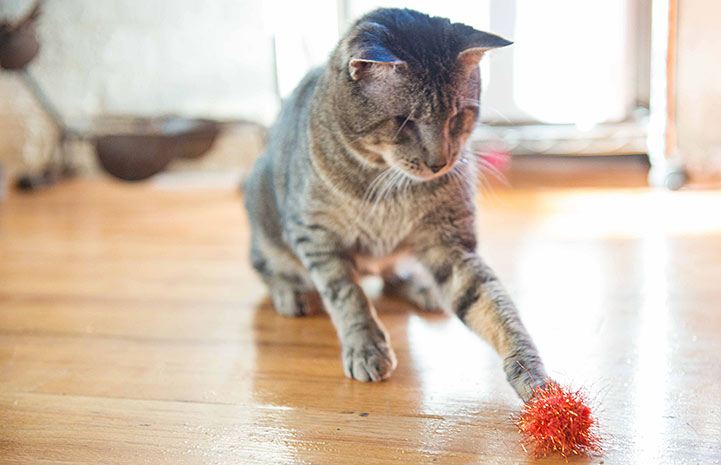 Despite being blind, Mewford loves to chase toys ― even the ones without sound