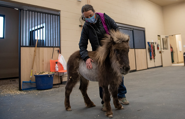 Dr. Tara with Daisy the mini horse
