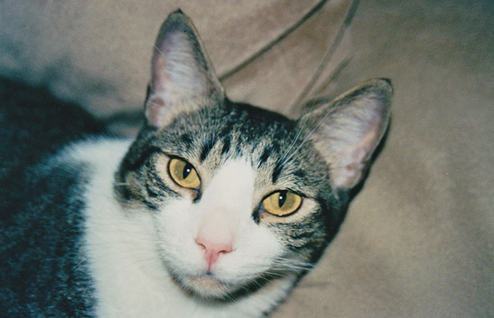 The face of Lennox the cat