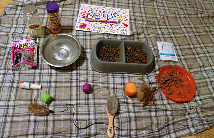 Goodies set out for Lennox the cat upon his return