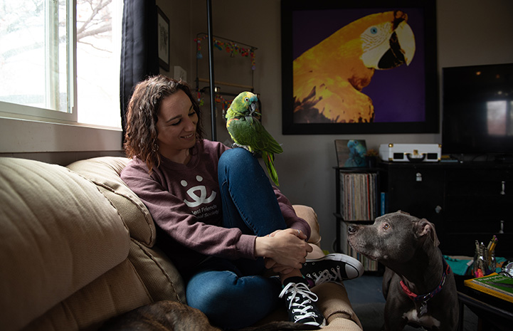 Amy sitting on a couch with Captain Turkey the parrot and a dog looking at them both