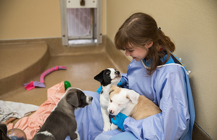Woman wearing a protective gown sitting on the floor with a litter of puppies