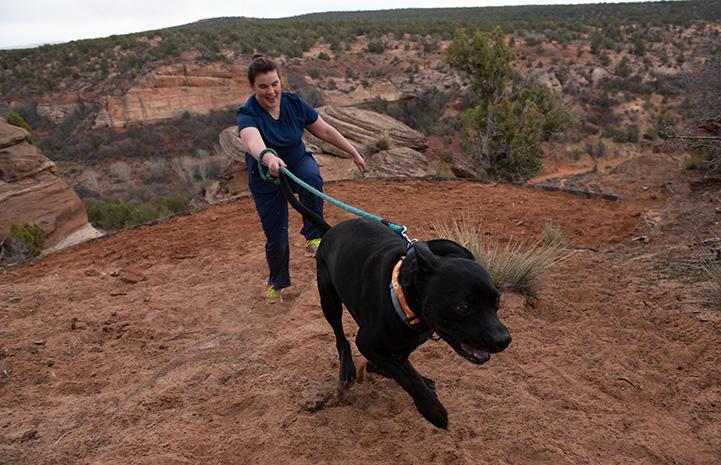 Trigger the black dog pulling Kelsie uphill on a hike