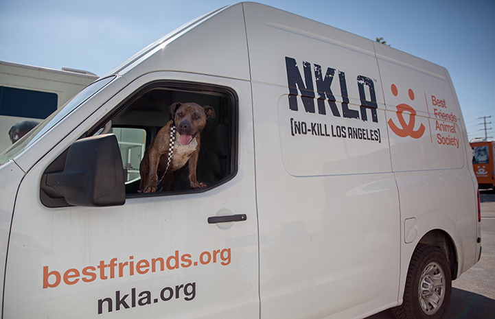 Dog in the window of a NKLA van