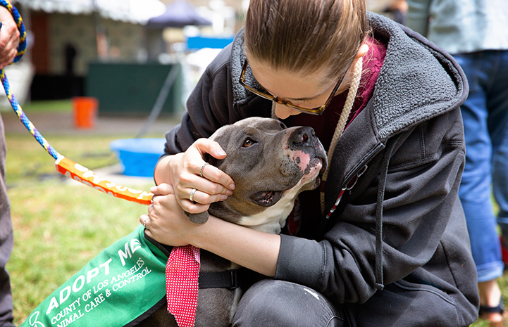 A woman hugging a gray and white pit bull terrier who is looking lovingly up at her at the A tent with human and dog activity at the NKLA Pet Super Adoption