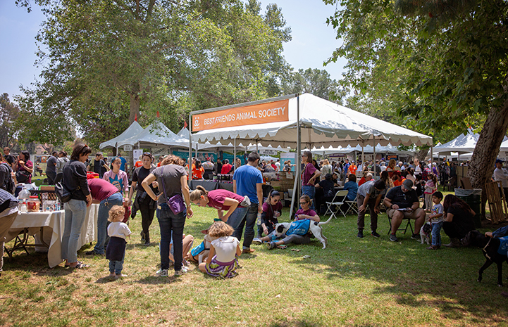 A tent with human and dog activity at the NKLA Pet Super Adoption