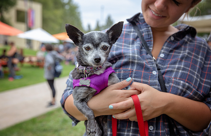 Smiling woman in a plaid shirt holding a gray speckled Chihuahua mix dog