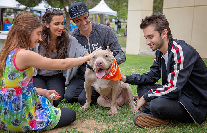 Actor Gilles Marini sitting with three other people petting a brown pit bull terrier wearing an orange Best Friends bandanna