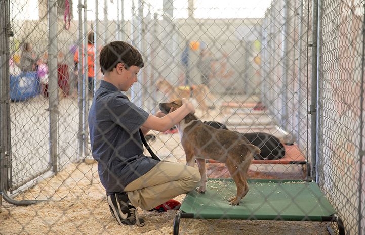 Young boy in a kennel petting a brown puppy on a Kuranda bed at the May the 4th NKUT Super Adoption event