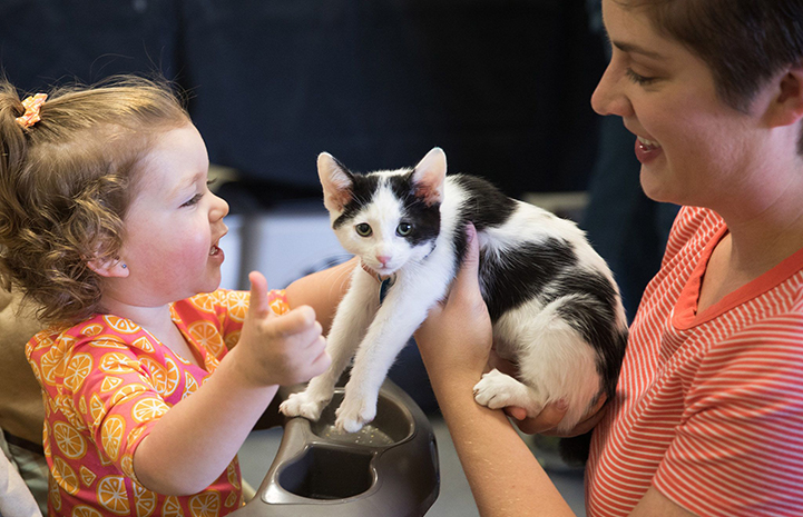 Woman holding Bane, a black and white kitten, with a toddler, after adopting him at the May the 4th NKUT Super Adoption event