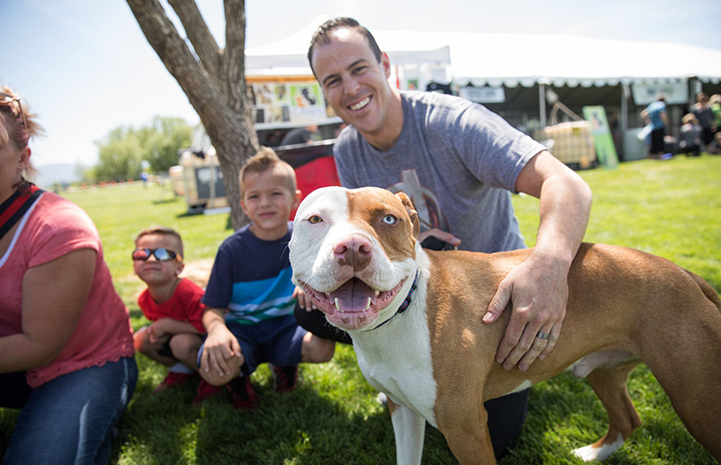 Smiling man patting Bowie, a brown and white pit bull terrier, after adopting him at the May the 4th NKUT Super Adoption