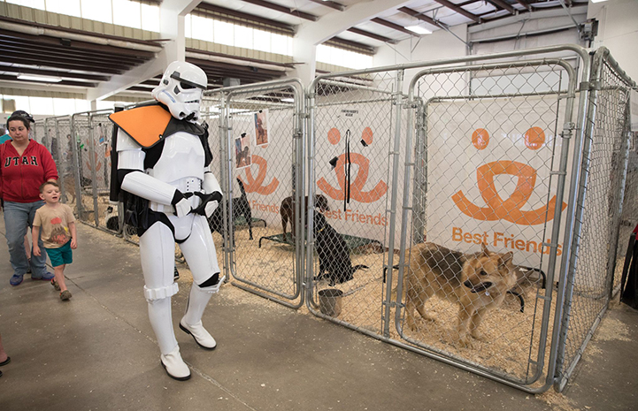 A person dressed as a Star Wars stormtrooper looking into kennels with dogs in them at the May the 4th NKUT Super Adoption event