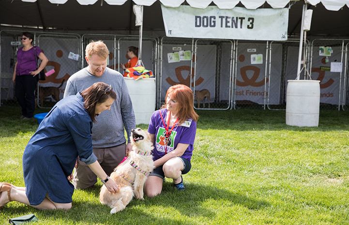 A family meeting Molly the dog from CAWS in front of a dog tent at the May the 4th NKUT Super Adoption