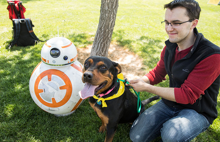 A man holding a black and tan rottweiler-type dog on a leash next to a BB8 Star Wars robot at the May the 4th NKUT Super Adoption