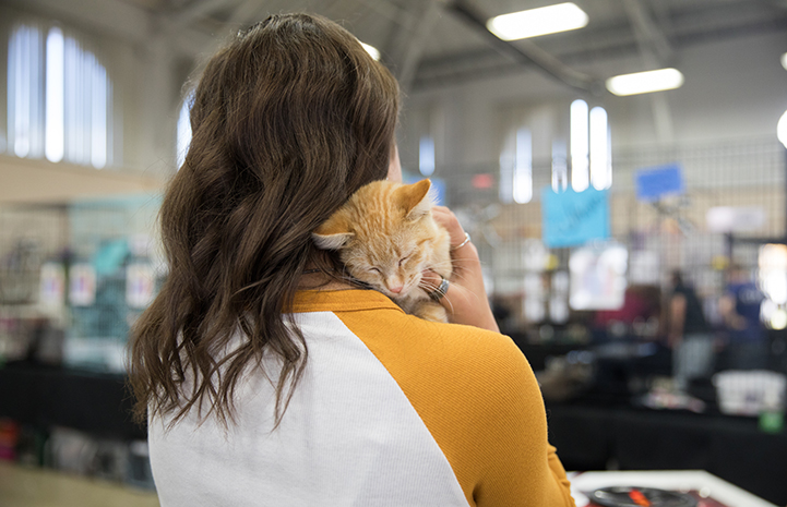 The back of a woman holding an orange tabby cat on her shoulder