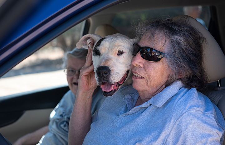 Yuma the dog in a car with the woman who adopted him