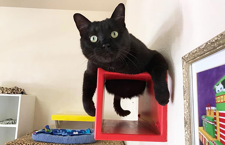 Black cat lying on top of a wooden box attached to the wall
