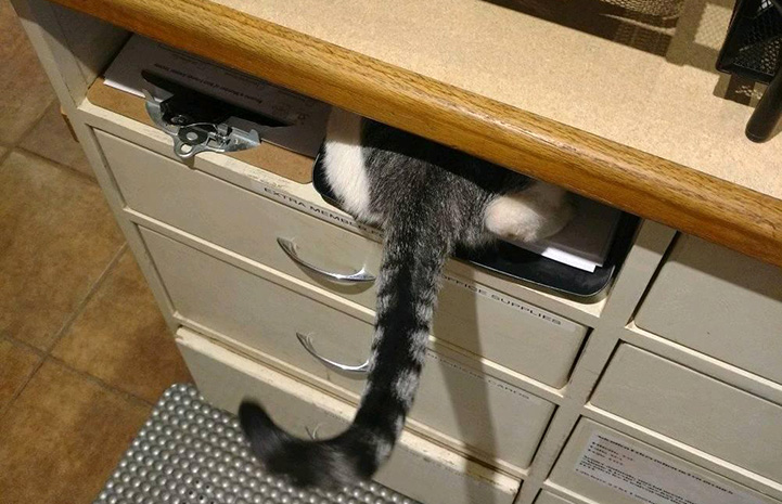 Tabby cat's hind end and tail sticking out from hiding between a desk and a file cabinet